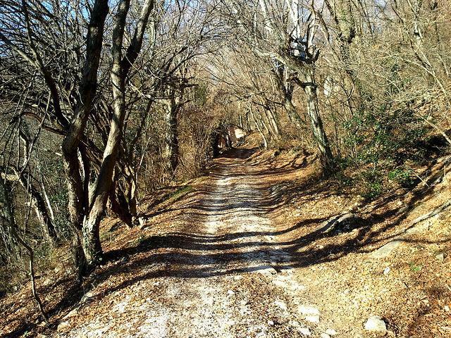 percorso bushcraft