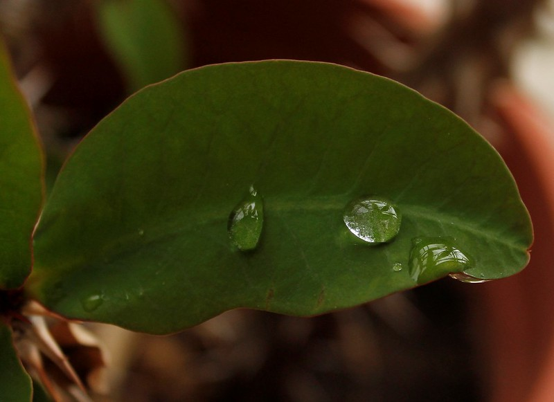 acqua in natura